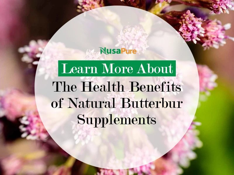 Benefits of Consuming Natural Butterbur Supplements