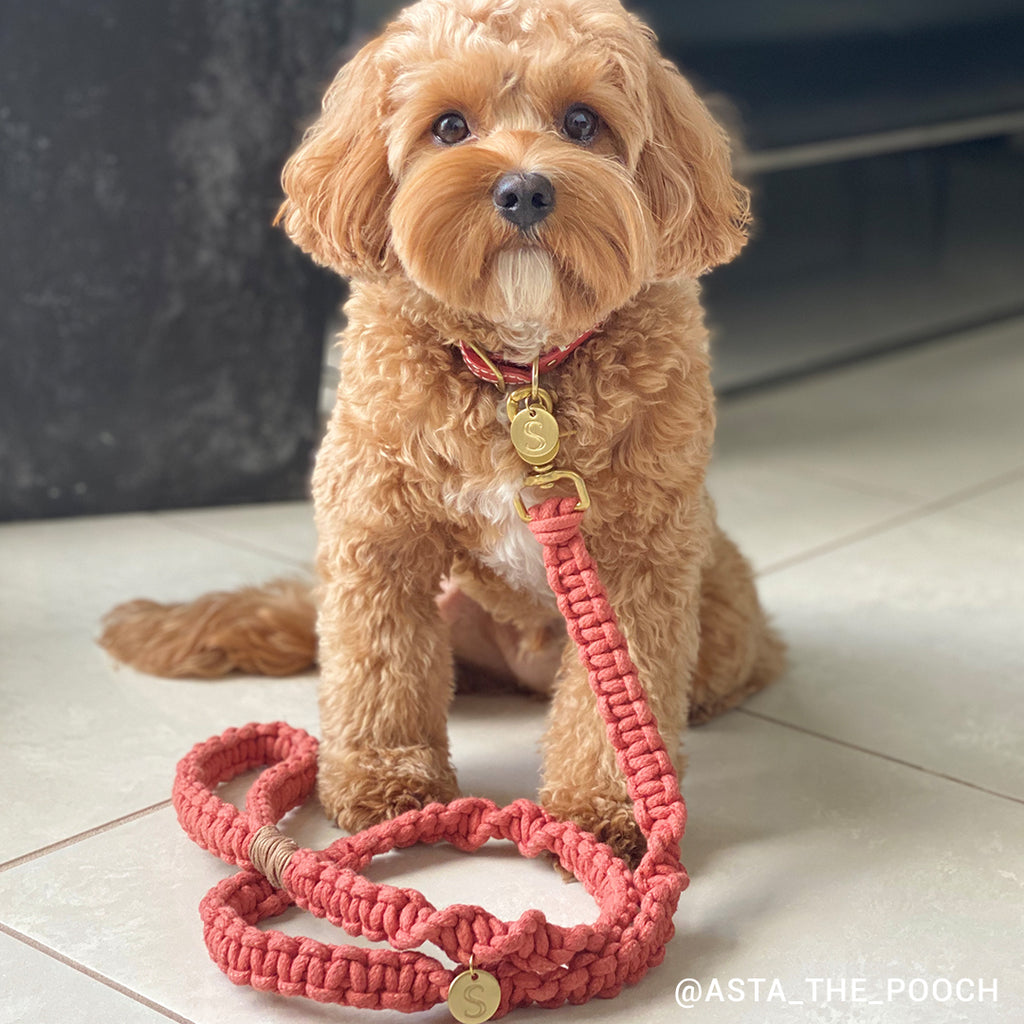 Macramé Originals Dog Lead - Terracotta Red