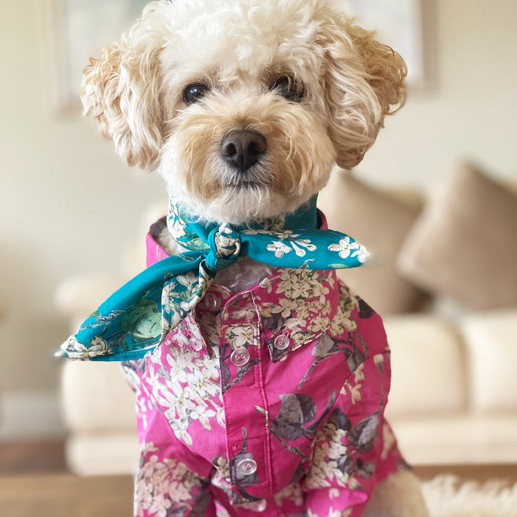 Liberty Dog Shirt - Pink Floral