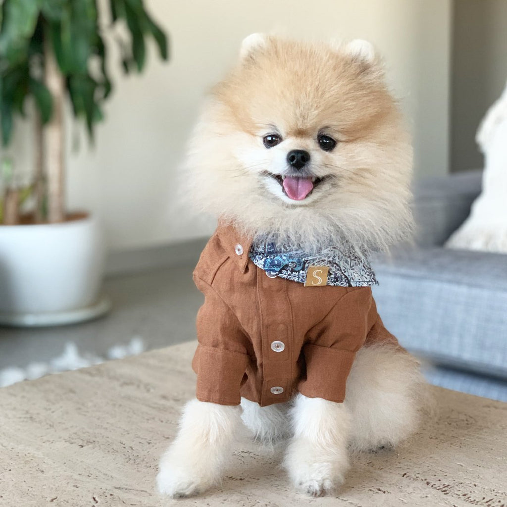 brown dog shirt