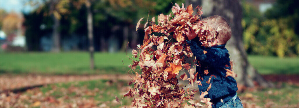 Love Autumn & Get Exploring Leaves With Children