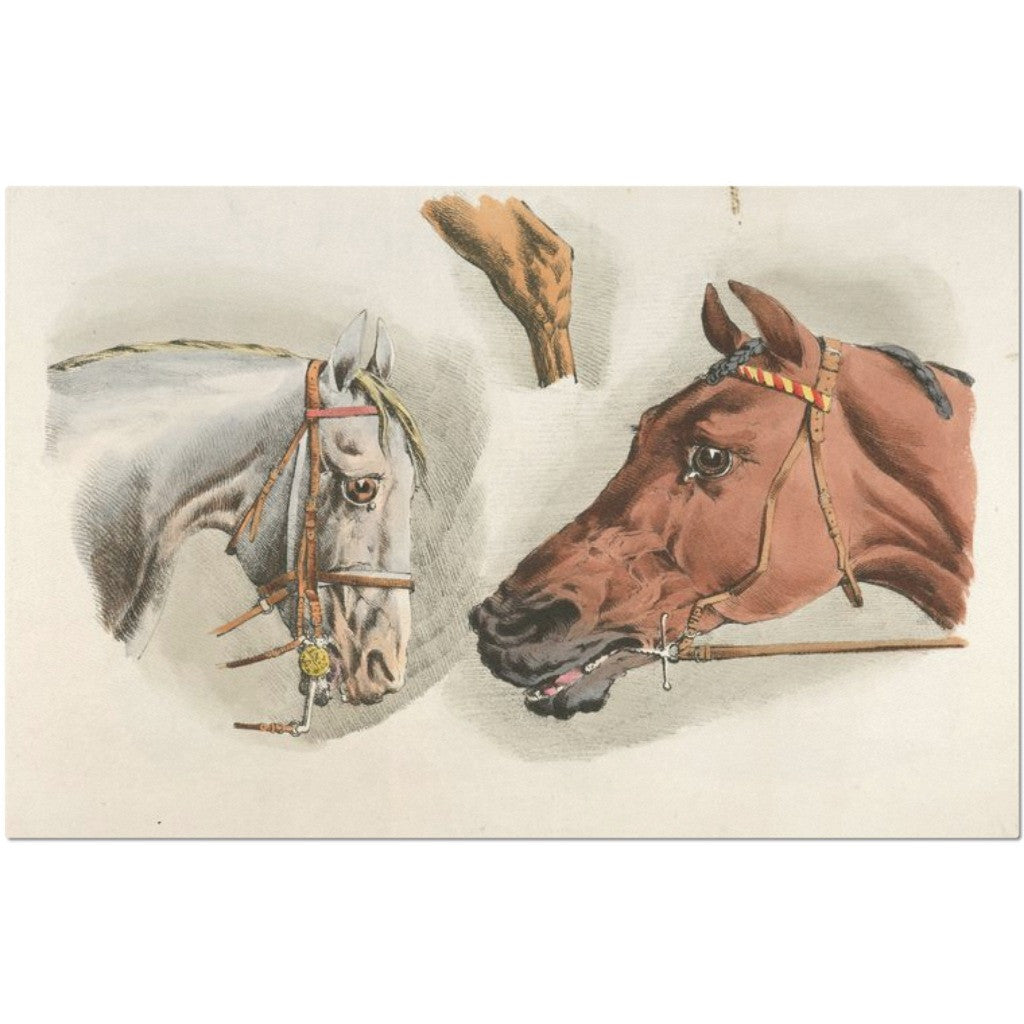 Laminated Vintage Horse Artwork Placemat 11 x 17""