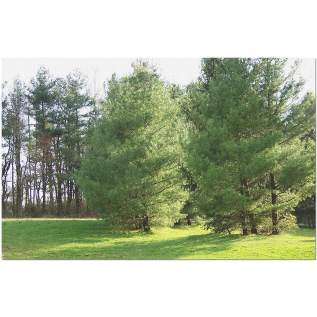 Laminated Trees Placemat 11 x 17