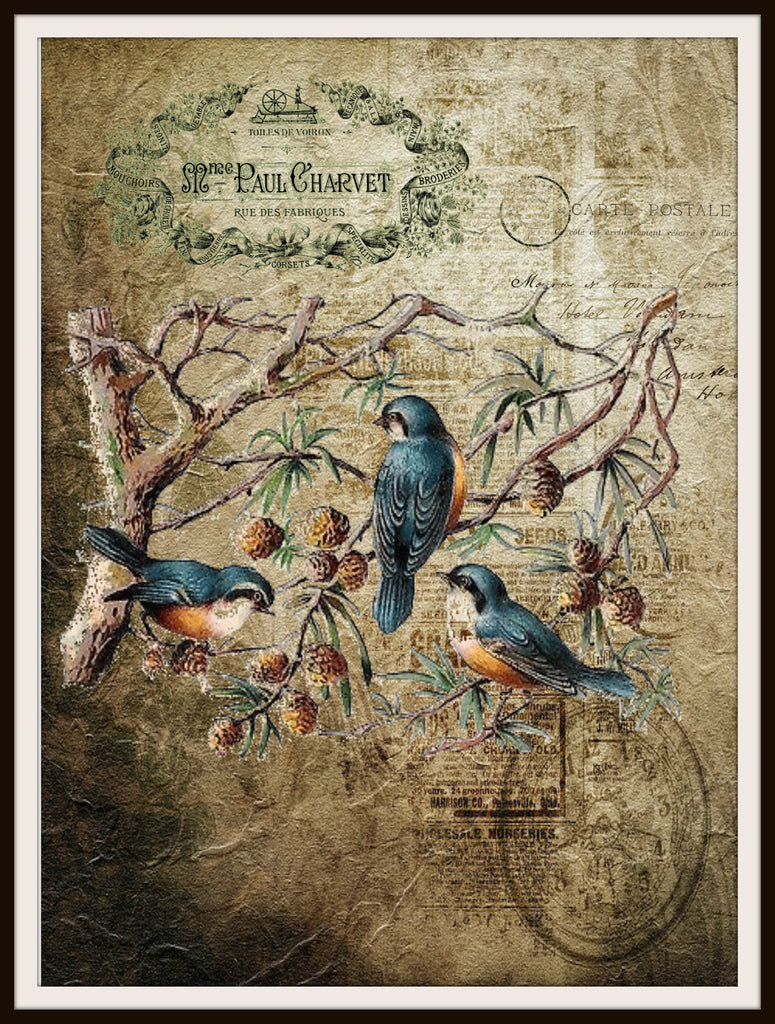 "Vintage Art Print Birds on Ephemera , Print Wall Decor, 8.5 x 11"" Unframed Printed Art Image"