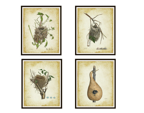 Set of 4 Vintage Art Prints Bird's Nests Posters, Print Wall Decor, Unframed Printed Art Image, Farm House Art, Rustic Art Print Posters