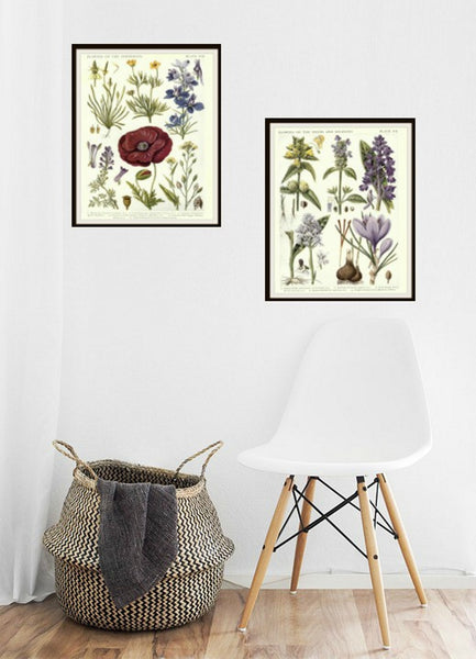 "Set of 2 Vintage Botanical Art Print Poster Reproductions ""British Herbals"" Set of 2 Unframed 8 x 10"" or 11 x 14"""