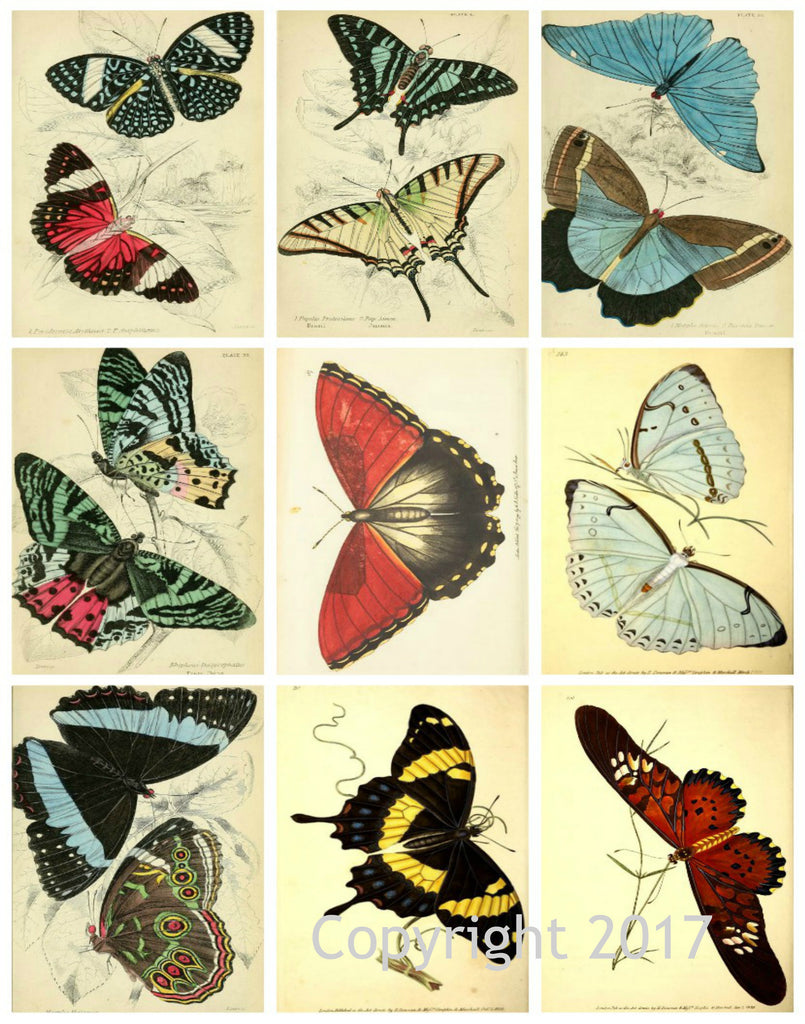 Vintage Butterflies  #103 Collage Sheet