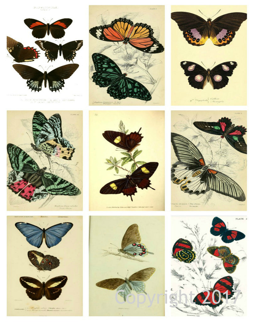 Vintage Butterflies  #104 Collage Sheet