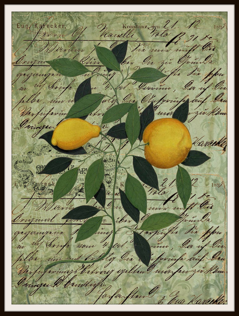 "Vintage Art Print Lemons Bothanical on Ephemera , Print Wall Decor, 8.5 x 11"" Unframed Printed Art Image"