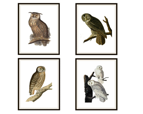 "Copy of Set of 4 Vintage Botanical Art Print Poster Reproductions ""Owls"" Unframed 8 x 10"" or 11 x 14"", Unframed"