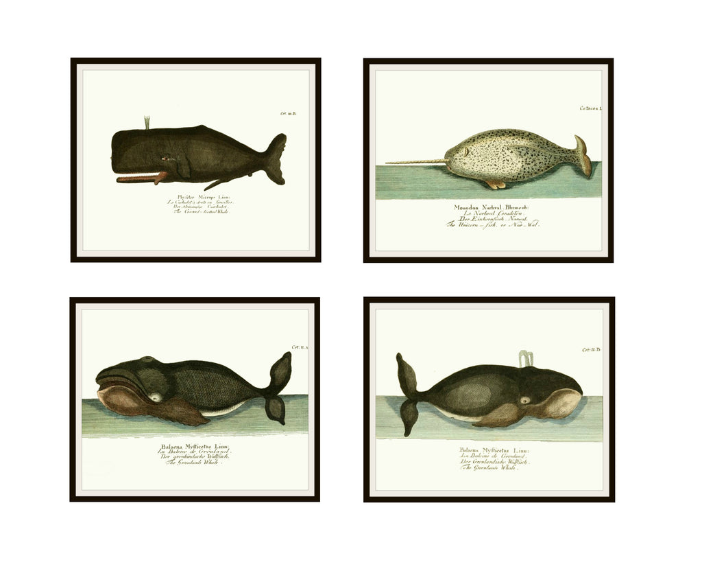 "Set of 4 Vintage Botanical Art Print Poster Reproductions ""Whales"" Unframed 8 x 10"" Unframed"