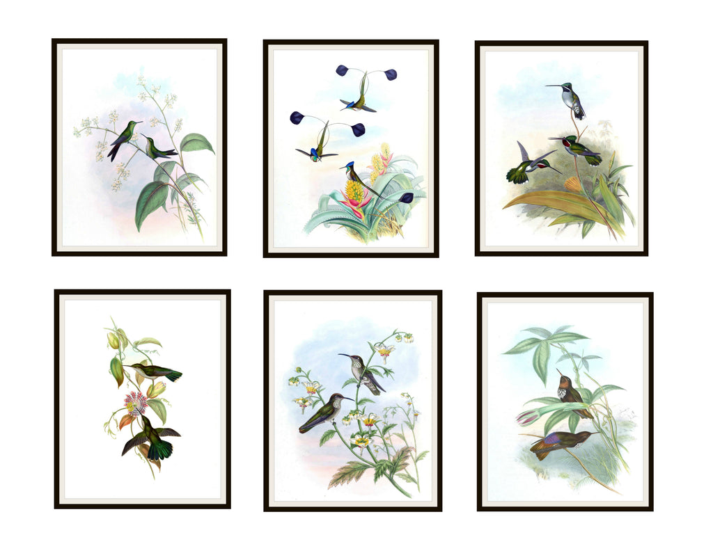 "Set of 6 Vintage Botanical Art Print Poster Reproductions ""Hummingbirds"" Unframed 8 x 10"", or 11 x 14 John Gould Hummingbirds"