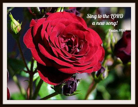 "Photograph Wall Decor ""Sing To The Lord""   Prints of Peace 8 x 10 Photo Print  Unframed"