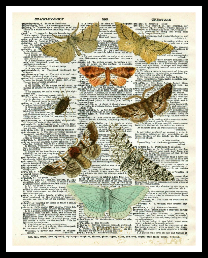"Vintage Butterfly Art Print Poster 8 x 10 or 11 x 14"" Unframed"