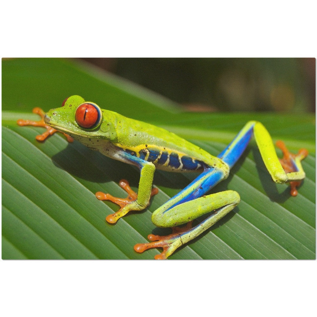 Laminated Tree Frog Placemat 11 x 17""