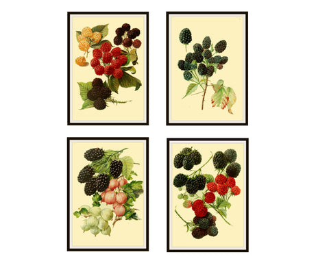 "Set of 4 Vintage Botanical Art Print Poster Reproductions ""Berries"" Set #2 Unframed 8 x 10"" Berry Art Print Posters"