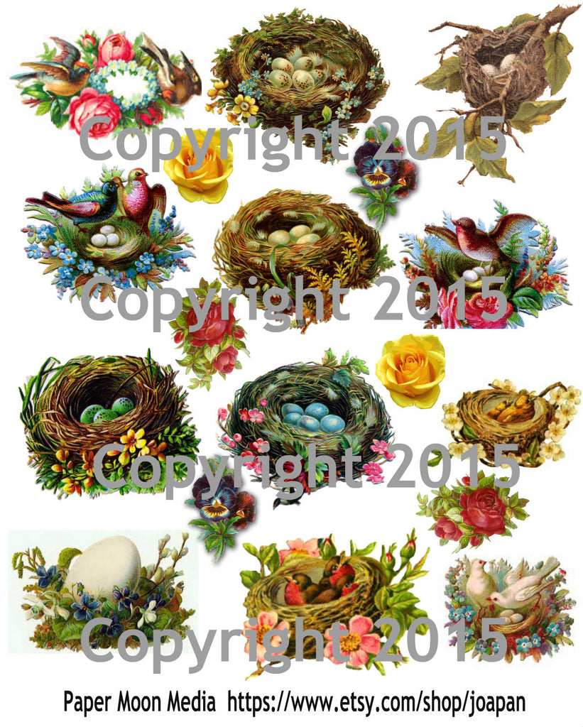 Vintage Images of Birds, Nests and Eggs Collage Sheet