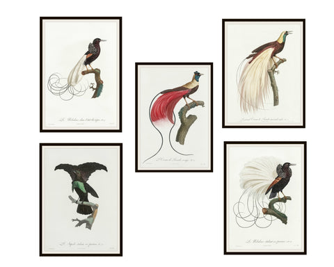 "Set of 5 Vintage Botanical Art Print Poster Reproductions ""Birds of Paradise"" Unframed 8 x 10"", Vintage Bird Art Print Posters Unframed"