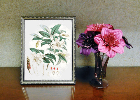 Vintage Botanical Flowers #5 Counted Cross Stitch Pattern INSTANT DOWNLOAD