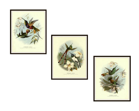 "Set of 3 Vintage Botanical Art Print Poster Reproductions ""Hummingbirds"" Unframed 8 x 10"""
