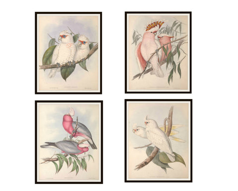 "Set of 4 Vintage Botanical Art Print Poster Reproductions ""Parrots"" Unframed 8 x 10"""