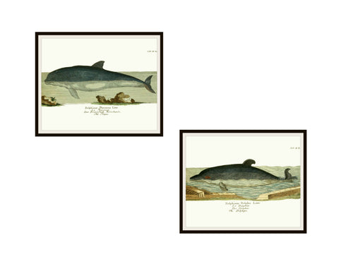 "Set of 2 Vintage Botanical Antique Bookplate Art Print Poster Reproductions ""Dolphins"" Unframed 8 x 10"" Unframed"