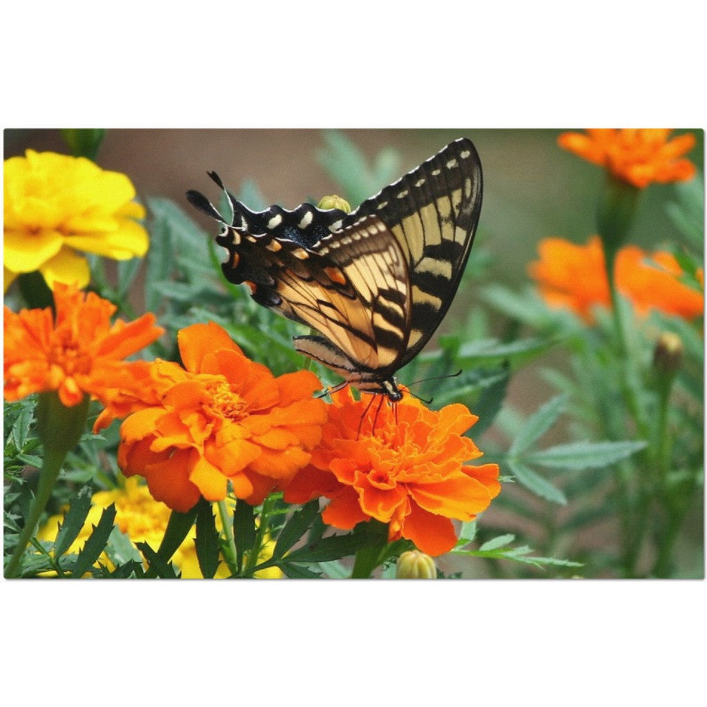 Laminated Butterfly and Flowers Placemat 11 x 17""