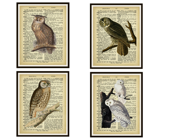 "Set of 4 Vintage Botanical Art Print Poster Reproductions ""Owls"" Unframed 8 x 10"" or 11 x 14"", Unframed"