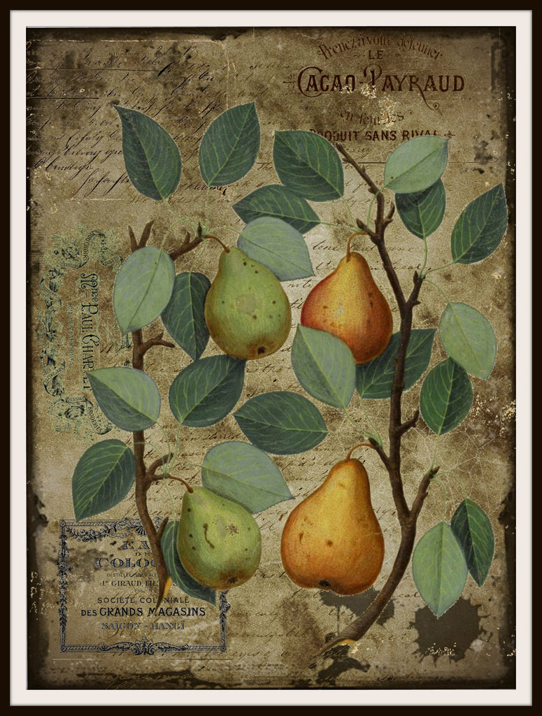 "Vintage Art Print Pears Bothanical on Ephemera , Print Wall Decor, 8.5 x 11"" Unframed Printed Art Image"