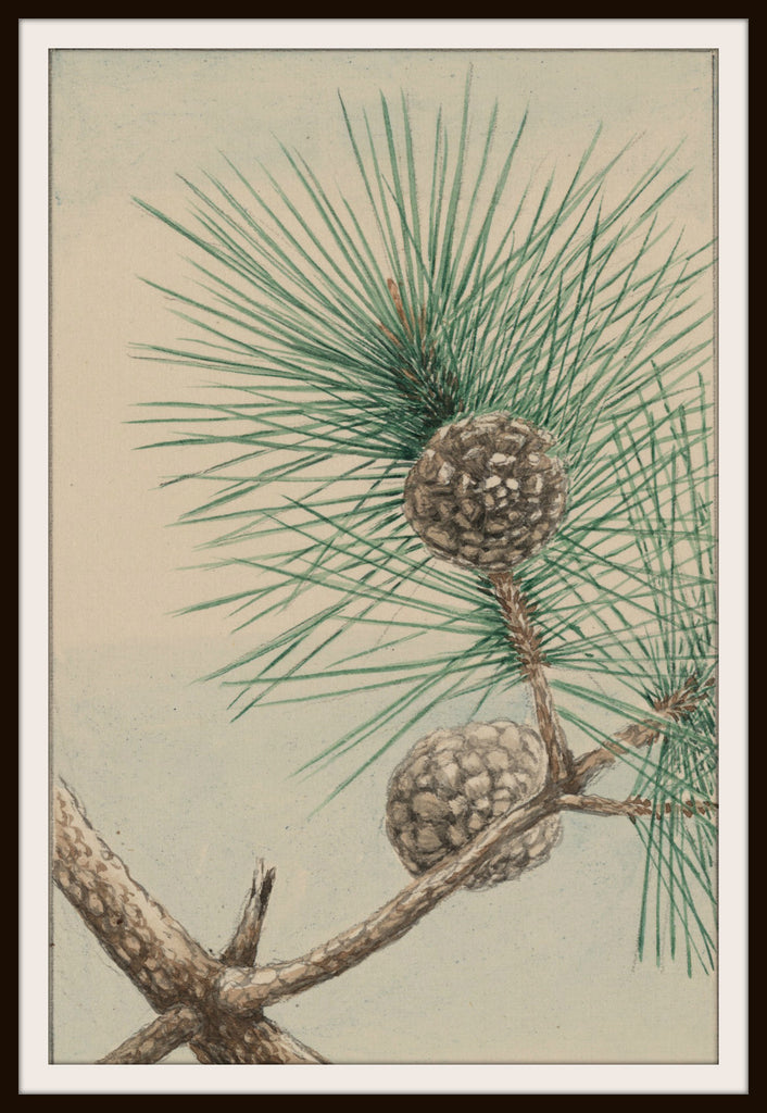 Vintage Poster Art Poster Pine Needles 8.5 x 11""