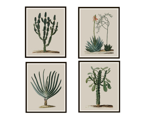 "Set of 4 Vintage Botanical Art Print Poster Reproductions ""Aloe Succulents"" Set Unframed 8 x 10"" or 11 x 14"""