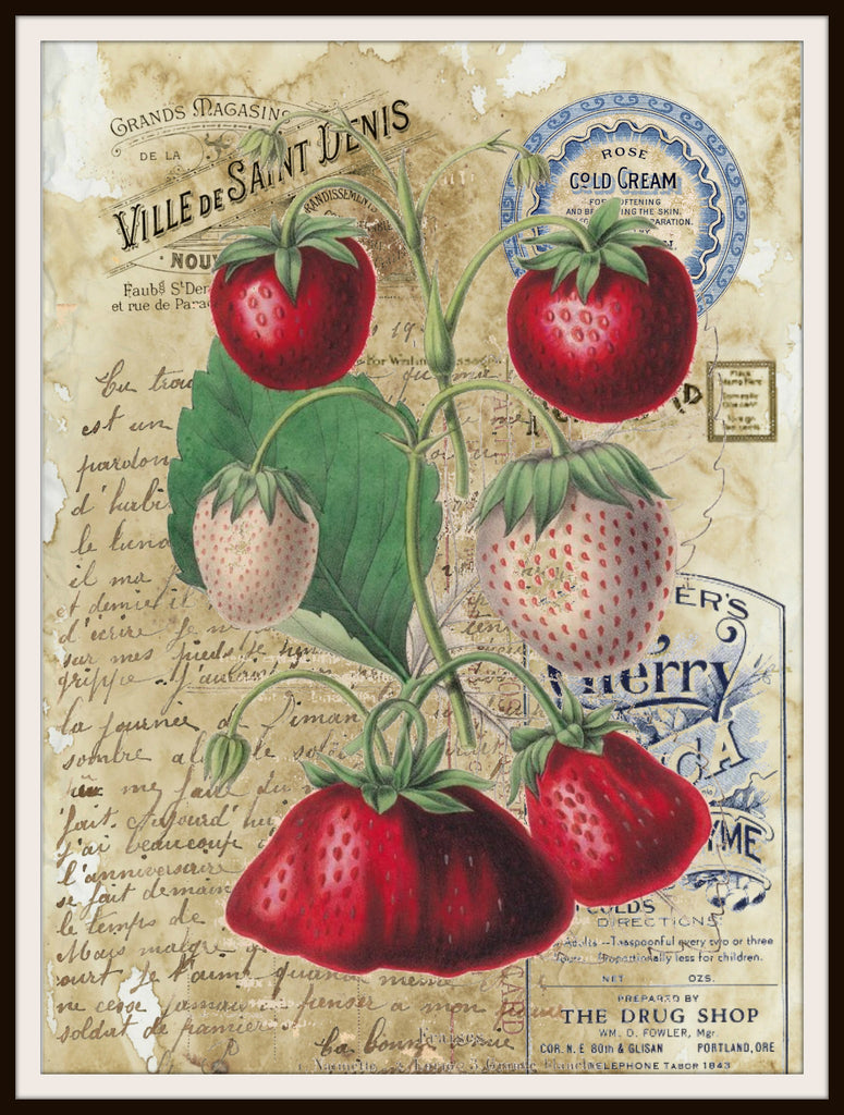 "Vintage Art Print Strawberries Bothanical on Ephemera , Print Wall Decor, 8.5 x 11"" Unframed Printed Art Image"