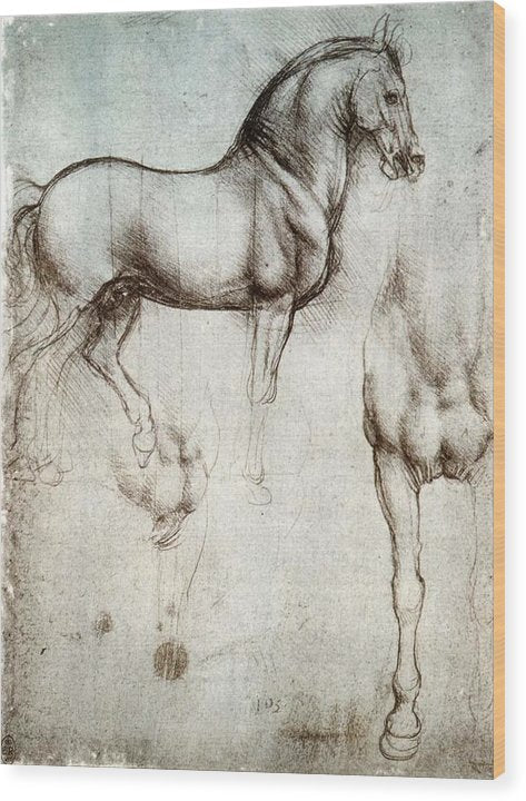 Study Of A Horse By Leonardo Da Vinci - Wood Print