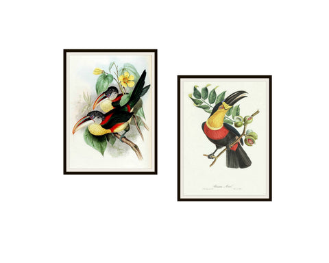 "Set of 2 Vintage Botanical Art Print Poster Reproductions ""Tucans"" #4 8 x 10"" or 11 x 14"", Unframed, Bird Prints, Vintage Tucan Prints"