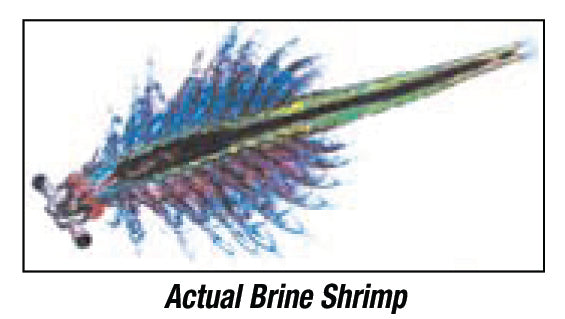 Brine Shrimp Eggs / Cycts