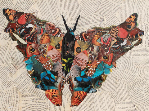 Butterfly Collage - multymedia