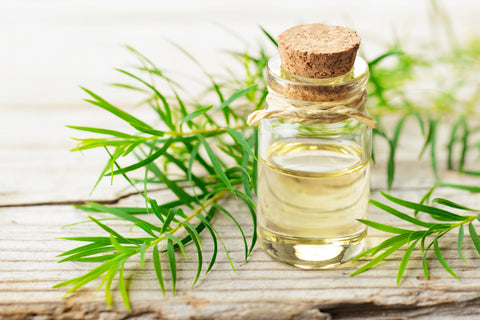 tea tree branch and oil in a bottle