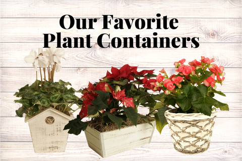 Our Favorite Plant Containers