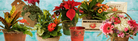 baskets and containers for holiday gifts