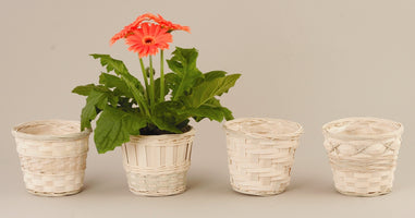 "5"" Whitewash Bamboo Planter Basket-Wald Imports"