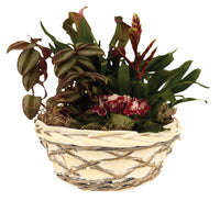 "10.5"" Woodchip, Willow & Vine Bowl Planter Flower Pot Gift Basket"