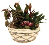 "10.5"" Woodchip, Willow & Vine Bowl Planter Flower Pot Gift Basket-Wald Imports"