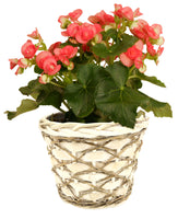 "7"" Woodchip, Willow & Vine Planter-Wald Imports"