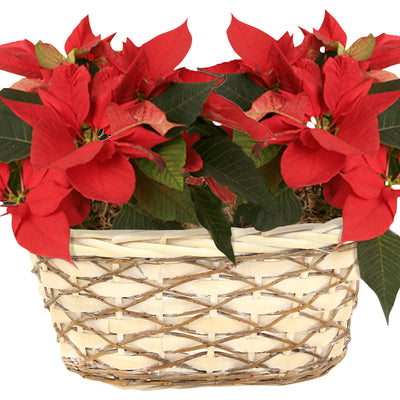 "Double 4"" Woodchip, Willow & Vine Planter-Wald Imports"