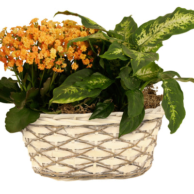 "Double 6"" Woodchip, Willow & Vine Planter-Wald Imports"