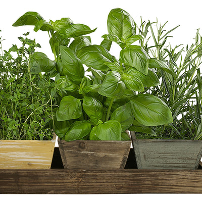 Distressed Wood Tray w/Planters-Wald Imports