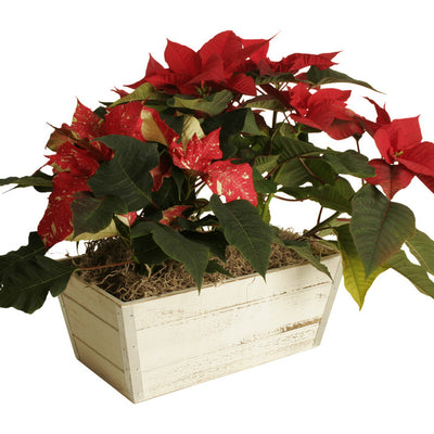 Whitewash Wood Planter-Wald Imports