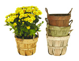 "4.5"" Pot Cover Assortment"