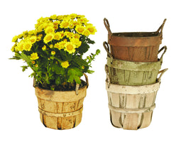 "4.5"" Planter Basket Assortment-Wald Imports"