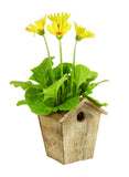 "4.75"" Rustic Wood Birdhouse Planter"
